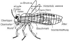 biologiearbeit klasse 6 insekten