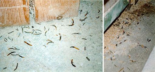 termiten bekämpfen holz