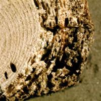 Das Deutsche Institut für Bautechnik spricht ein indirektes Verbot zur Anwendung von lösemittelhaltigen Holzschutzmitteln in Häusern zur Hausbockbekämpfung aus.